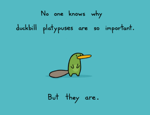 Embracing your own uniqueness – being a platypus in a world full of ducks (VIDEO)